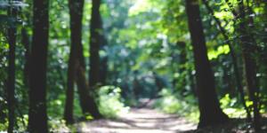 Fréquentation des espaces naturels et forestiers